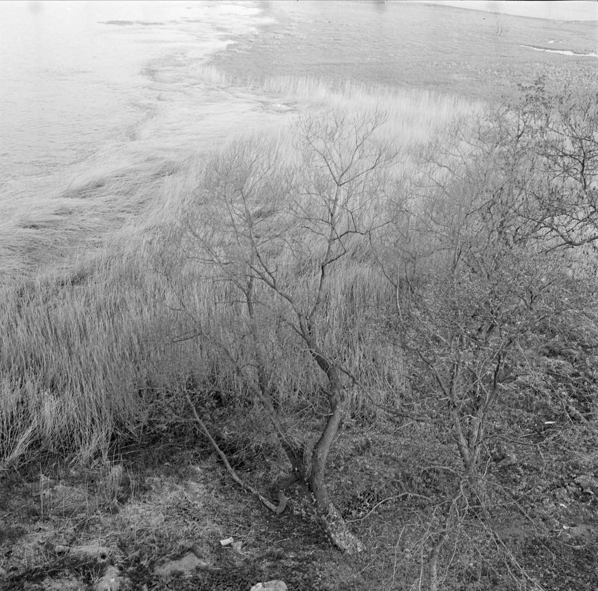 """""""Tidig morgon i maj"""" - Lårstaviken vid Wiks slott, Vik, Balingsta socken, Uppland maj 1965"""