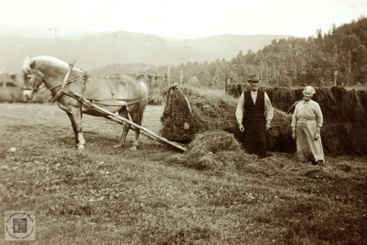 """Høying med hest og """"høytrom"""" på Flottorp. Grindheim Audnedal."""