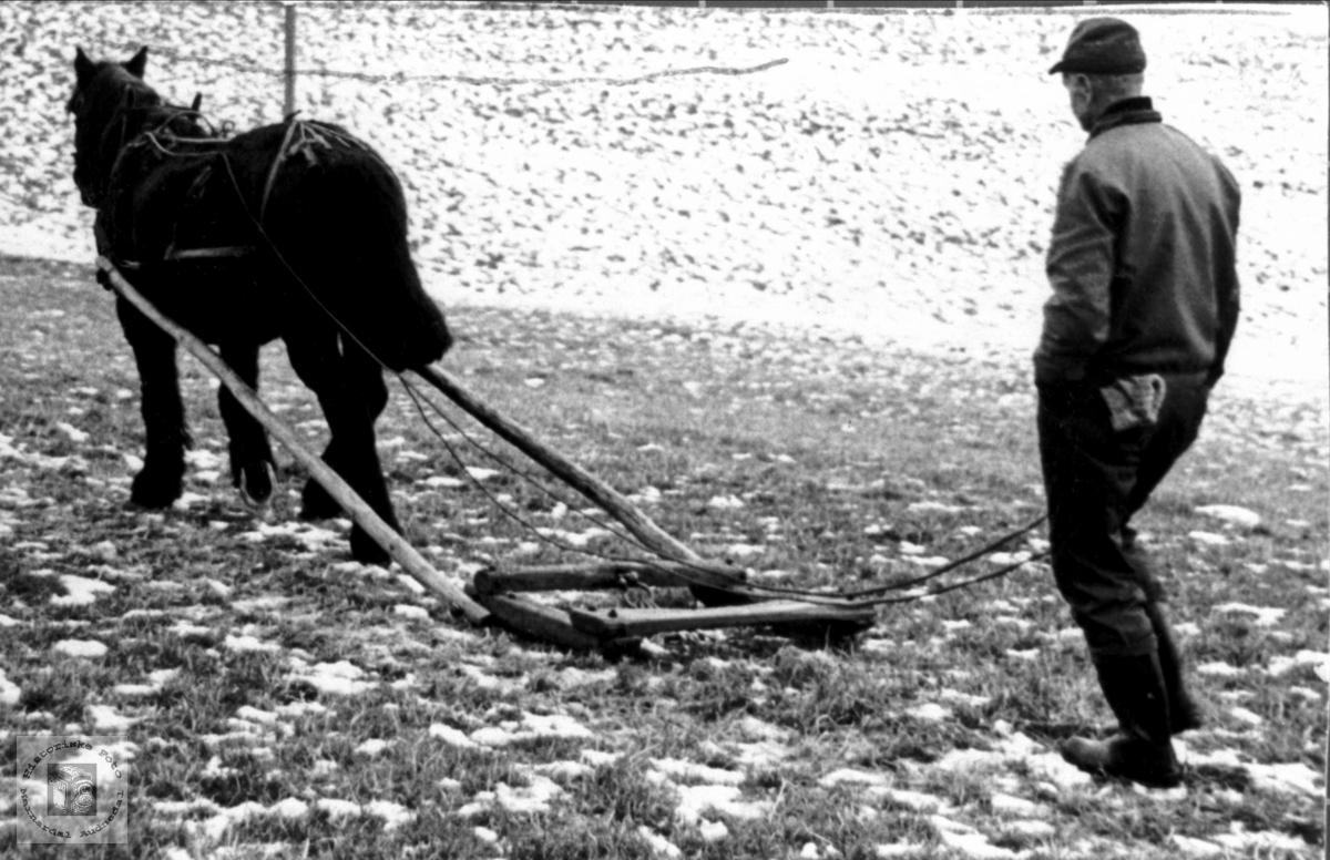 Arbid - Tømmerkjøring med hest og meis, Bjelland.