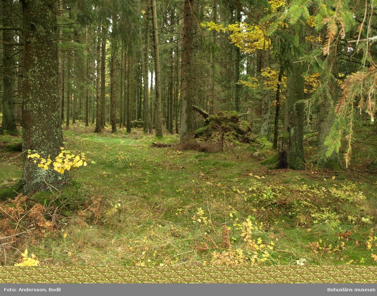 Den gamla stigen används idag delvis som traktorväg genom skogen. Foto: Bodil Andersson, Østfoldmuseene/Halden historiske Samlinger