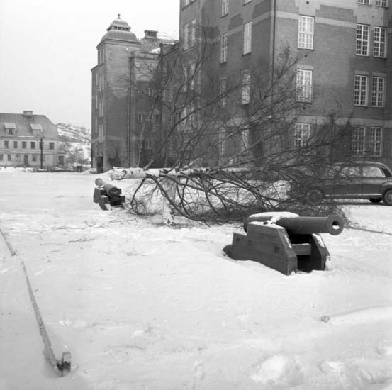 Nersprängt träd på I17, regementet i Uddevalla i febuari 1958