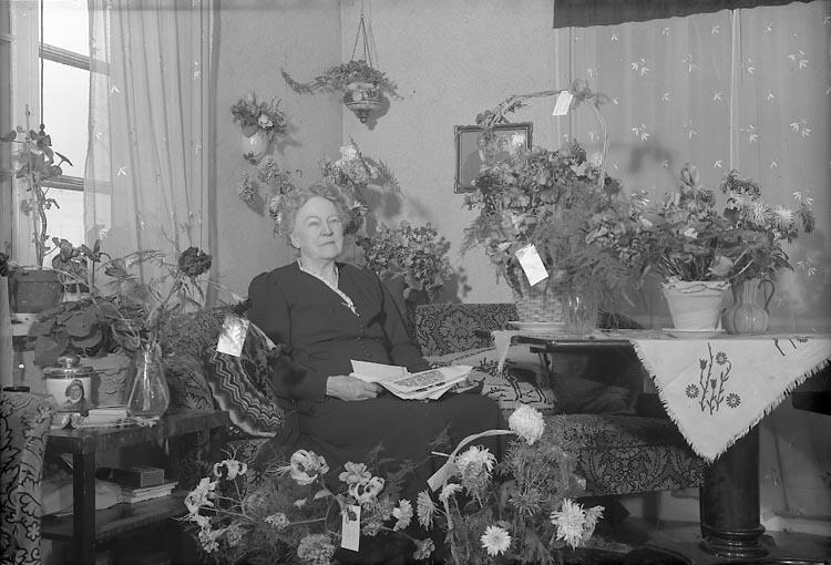 """Enligt fotografens journal nr 8 1951-1957: """"Lewin, Fru Här"""". ::"""