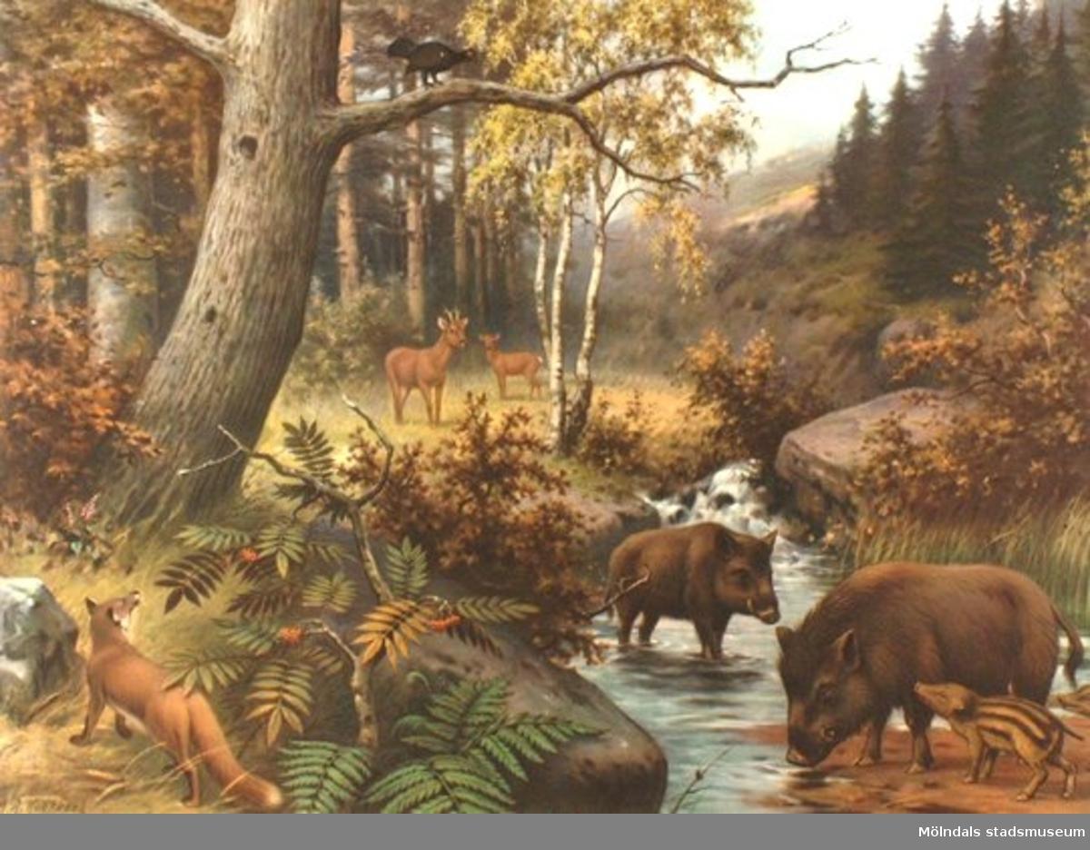 Biologi.Djurliv i ett tyskt berglandskap.