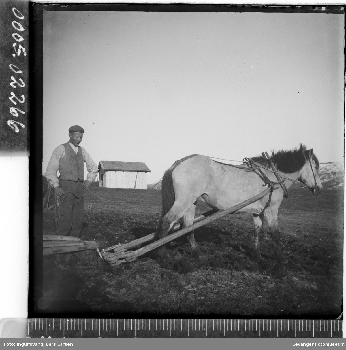Mann med hest og plog.