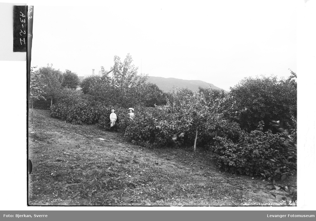 Fra frukthagen på Hylla Havebrugsskole.