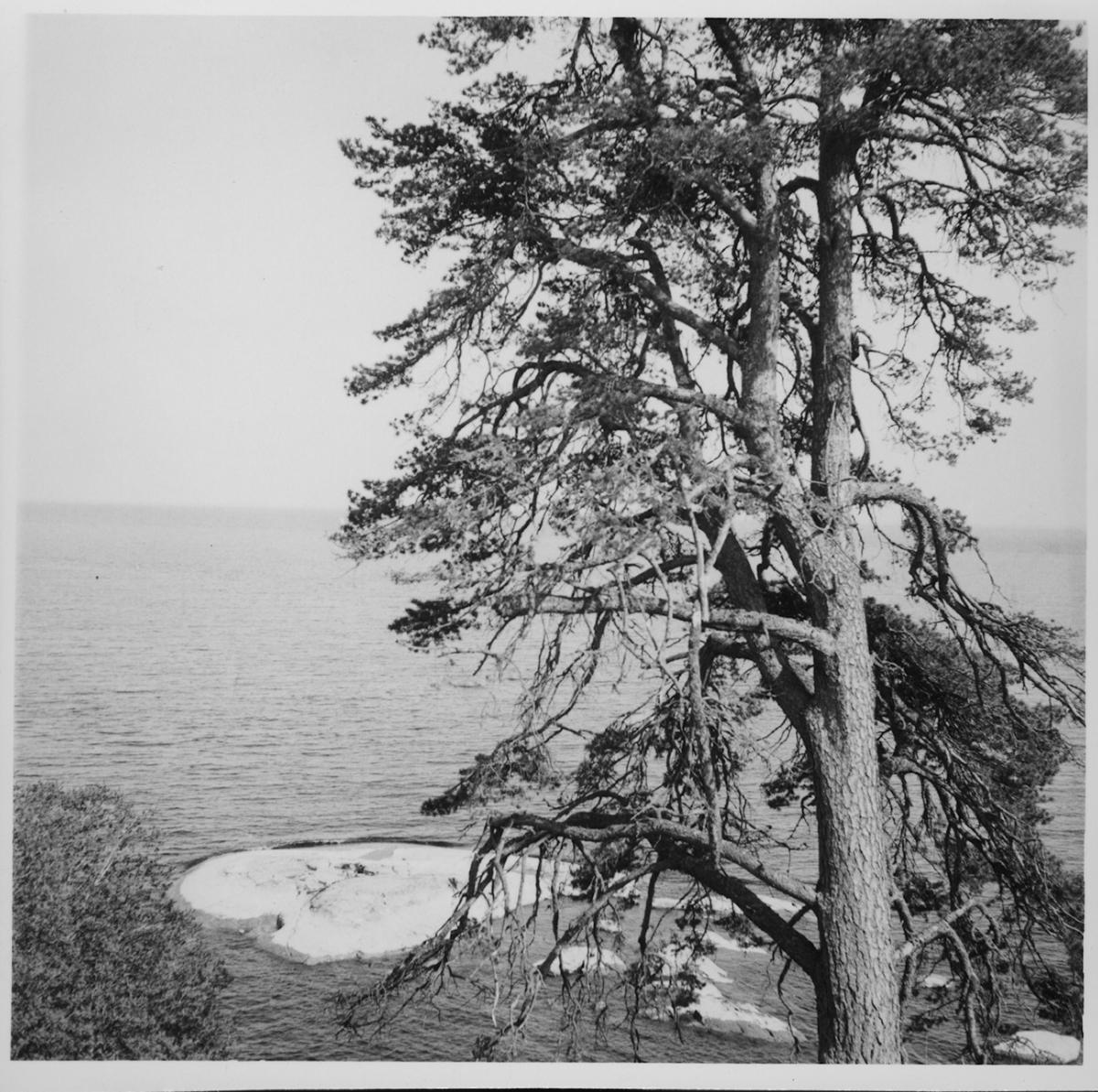 Bolstad, Utsikt över Vänern från Dalaborg