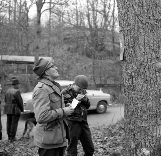 """Enligt notering: """"Skogspromenaden Nov -59""""."""