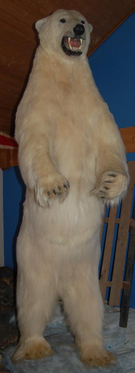 Utstoppet stående isbjørn