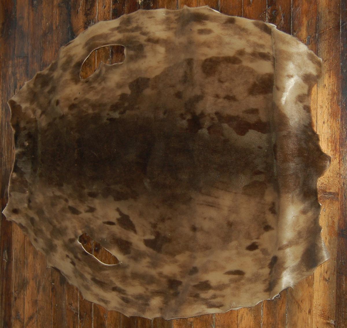 Gammelhunden er gulkvit med svart hode og en stor, svart salformet flekk på sidene