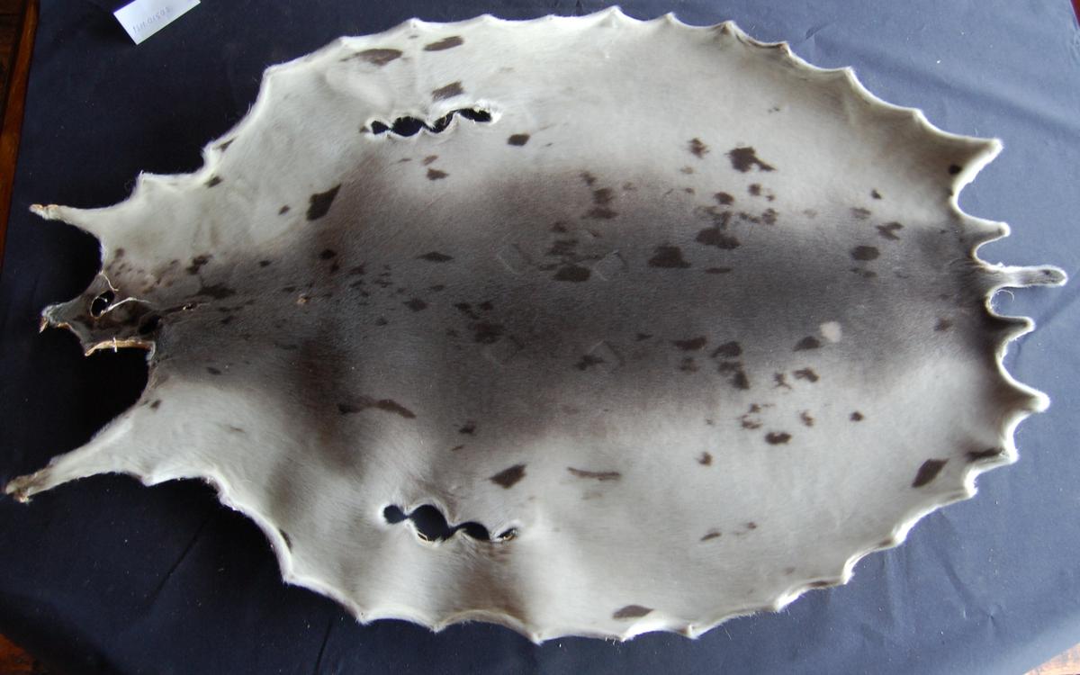 Gråselen sin pels er lys grå med svarte spetter.