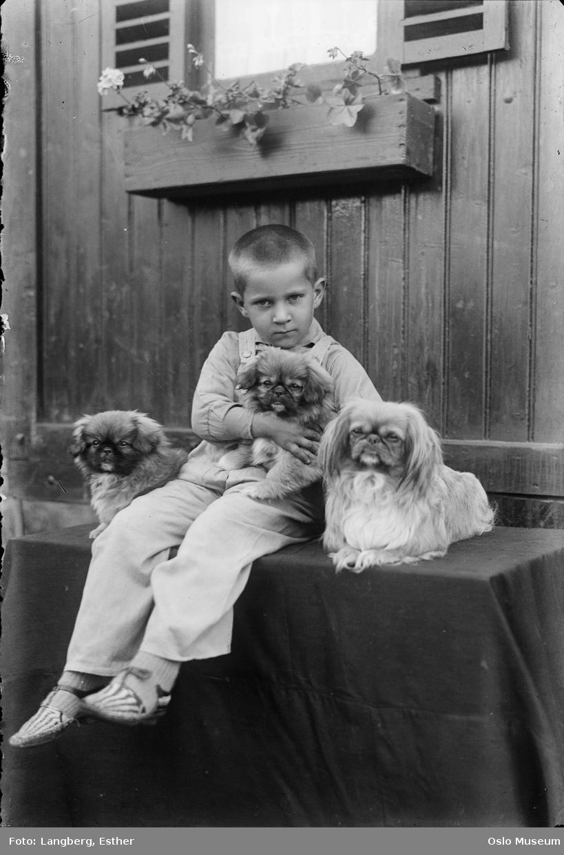 gutt, hunder, hvalper, pekingesere