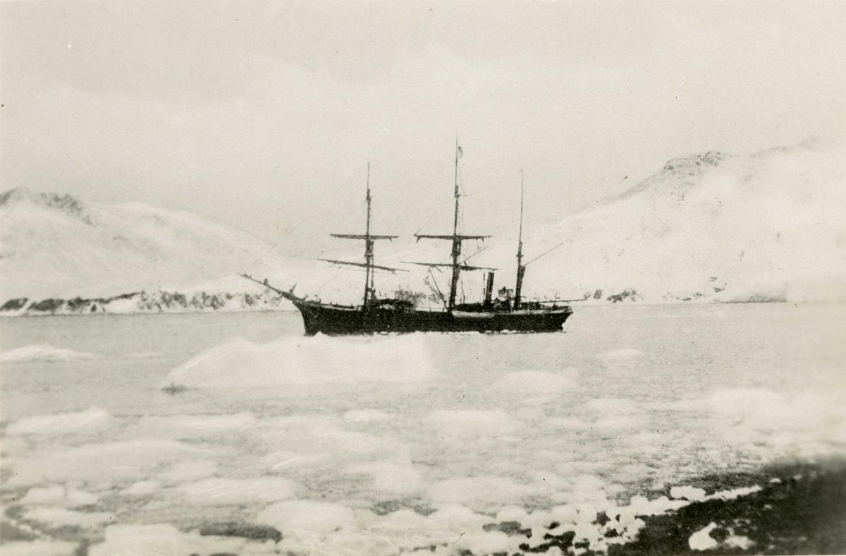 "D/S Antarctic (b.1871, J. Jørgensen, Drammen) i isen, trolig i Cumberland Bay. Rederi: Rederiactieselskabet ""Antarctic"" (Svend Foyn)."