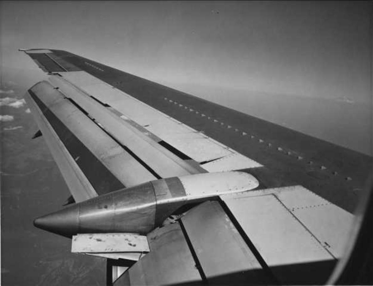 Ett fly i luften. Venstre vinge.