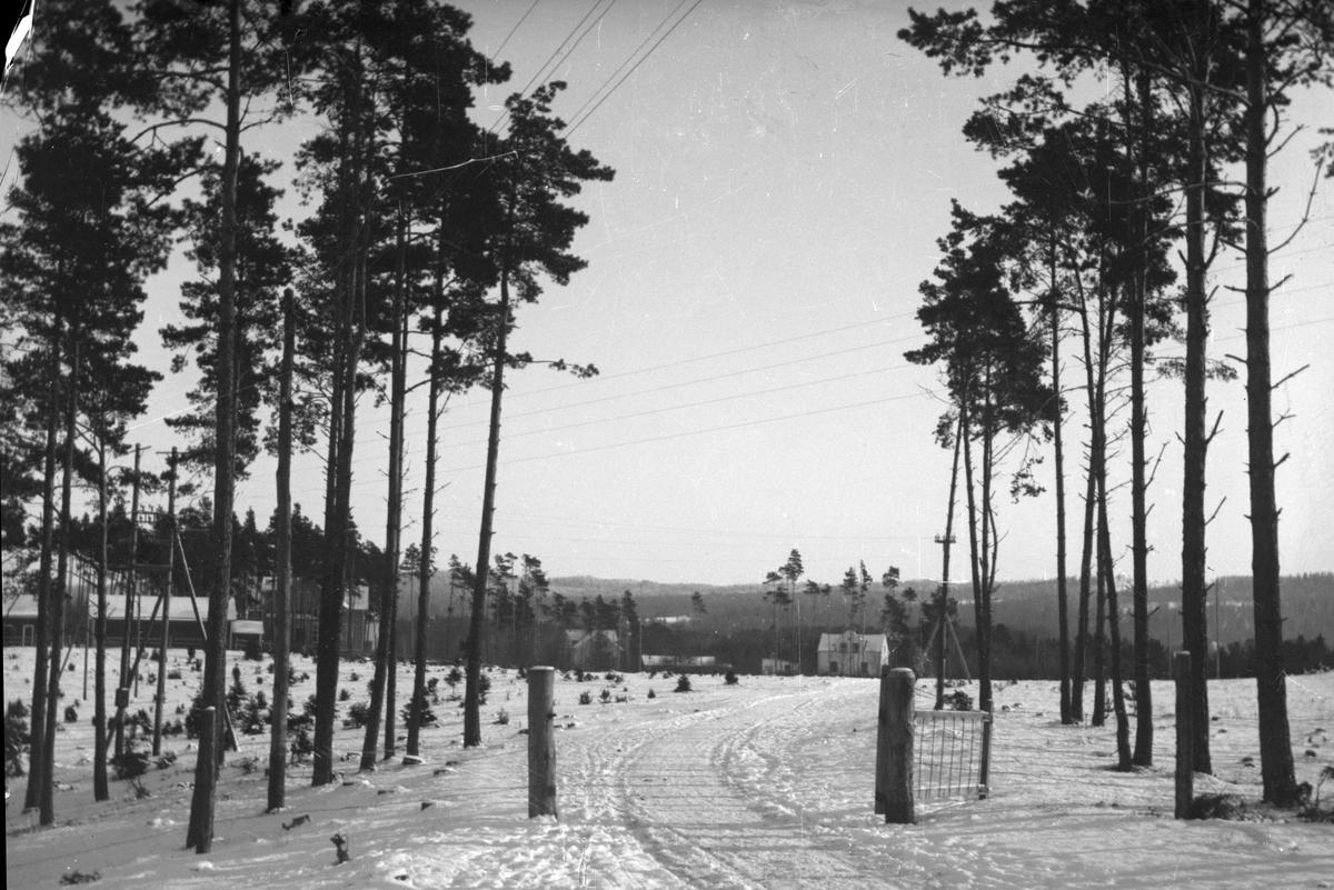 I skogsbrynet är en grind öppen ut mot ett snöigt fält. I bakgrunden syns några hus.