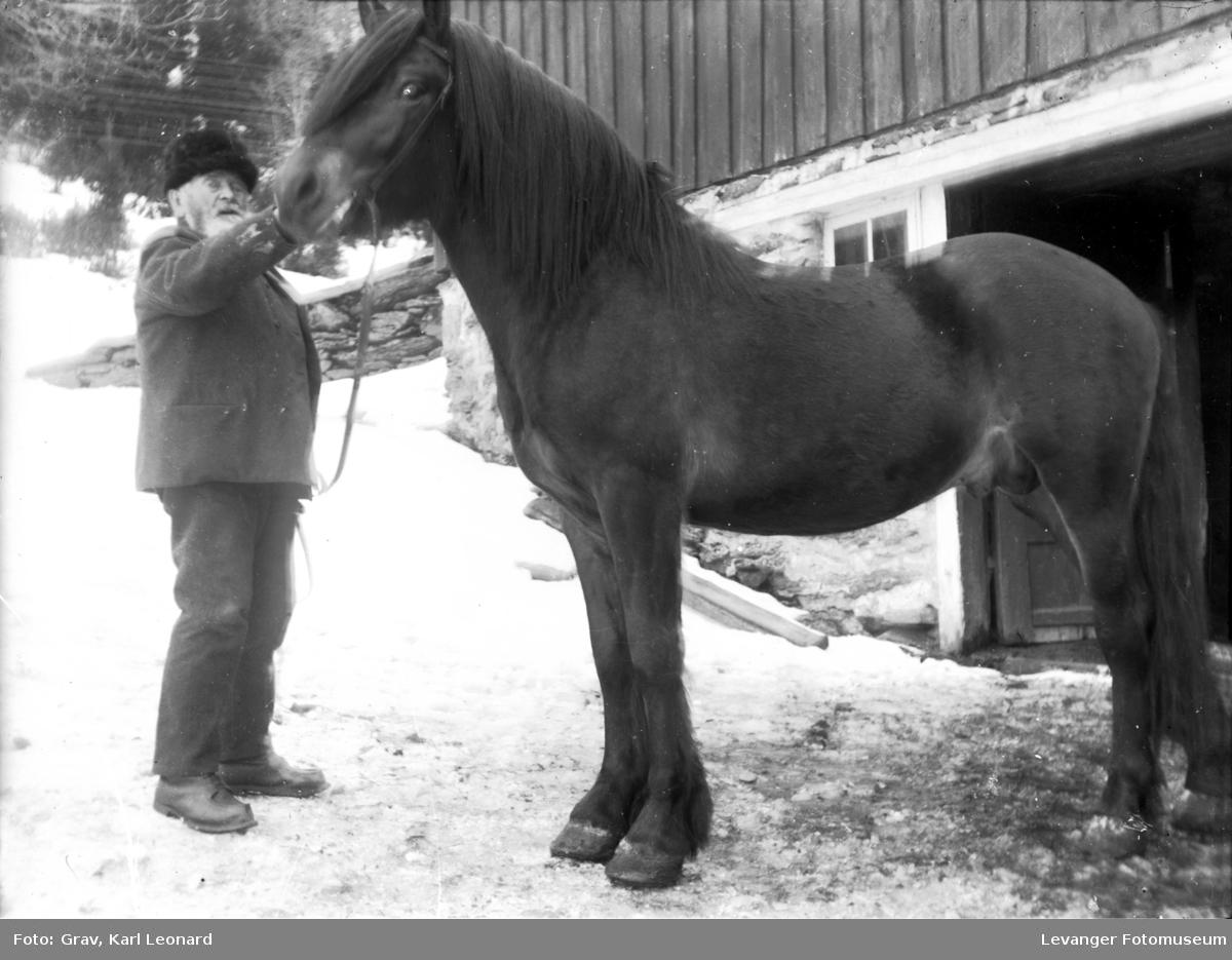Dyr, mann og hest.