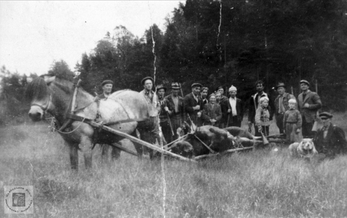 Elgjakt, Høye aust