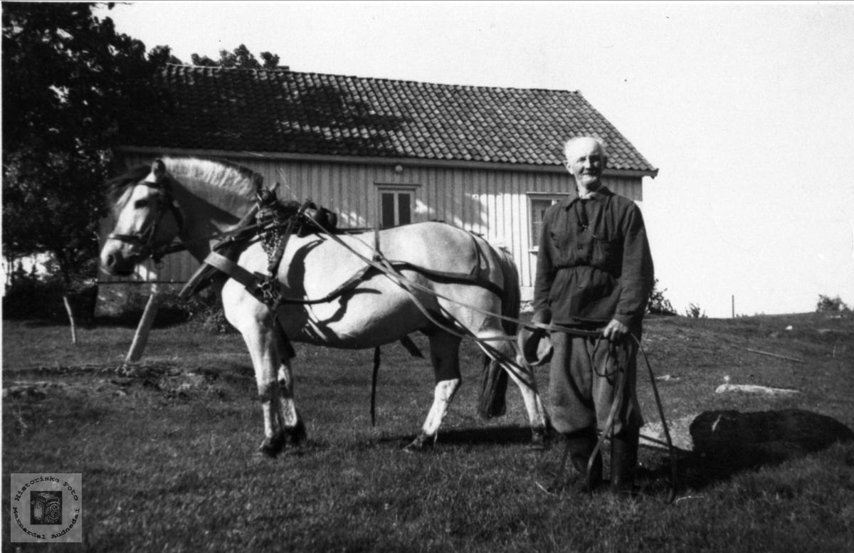 Nils Skaar med hest