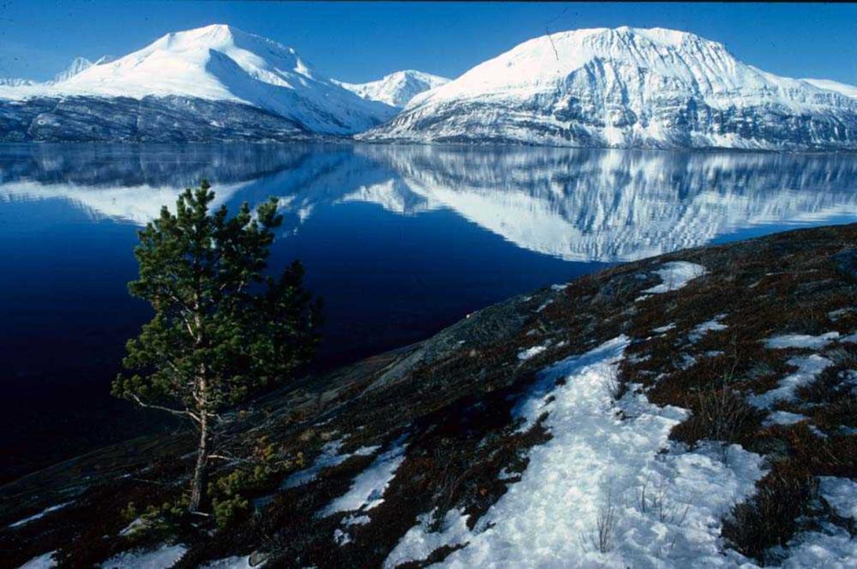 Landskap. Vinteridyll på Nordlandskysten