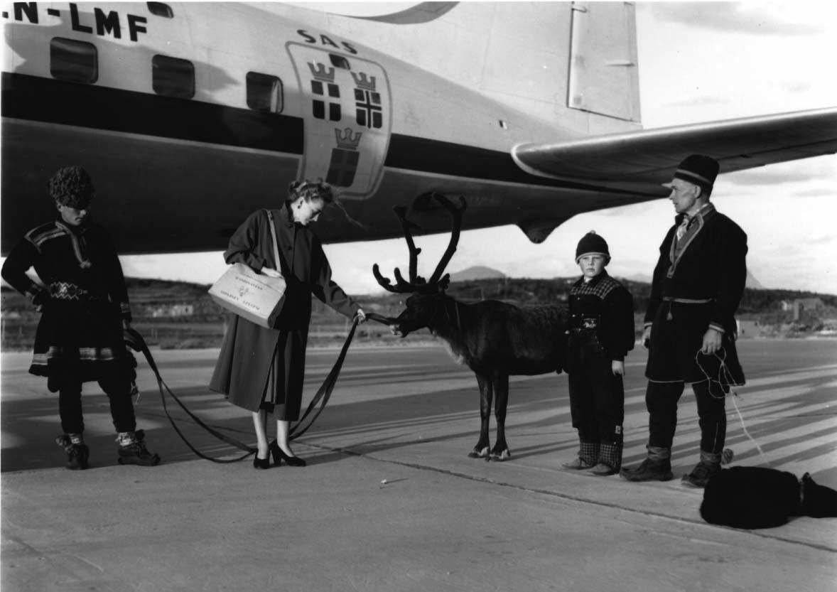 """Lufthavn, 1 fly på bakken DC-6B, LN-LMF """"Agne Viking"""" fra SAS. 3 samer med hund og rein ved flyet + 1 annen person.."""