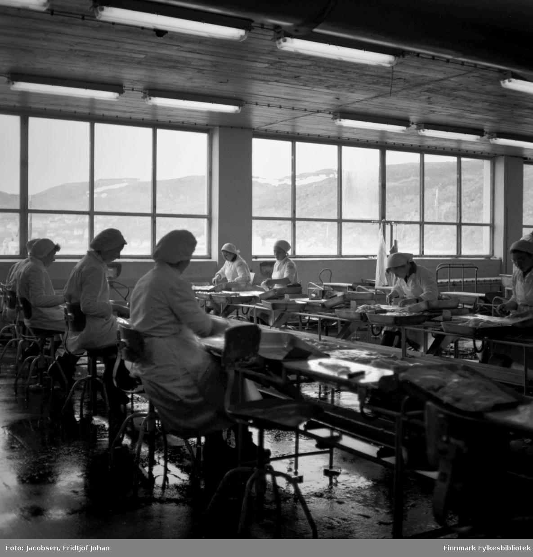 Interiør fra filétsalen på Findusfabrikken. Flere kvinner sitter ved bordene og alle har hvite frakker og hetter på hodet. Gjennom vinduet ses Fuglenesfjell med snøflekker på toppene og deler av bebyggelsen på Fuglenes kan skimtes til venstre på bildet.