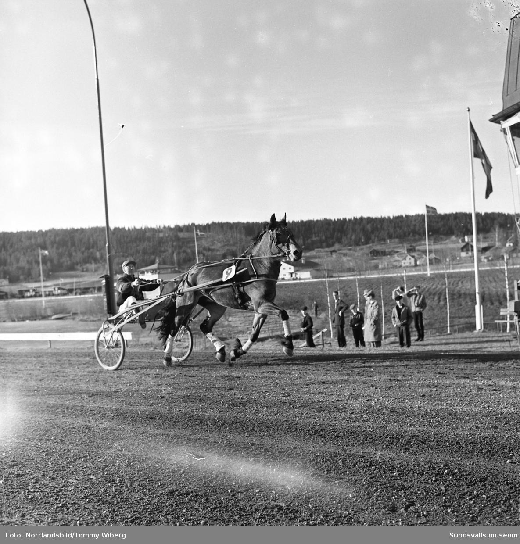 Loritza och Herman Björk vinner Bergsåkers Större Nordsvenska Fyraåringslopp 1960.