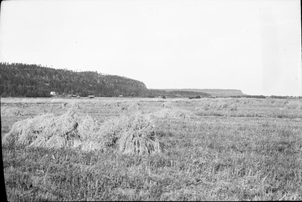 Halle och Hunneberg  Floslätten