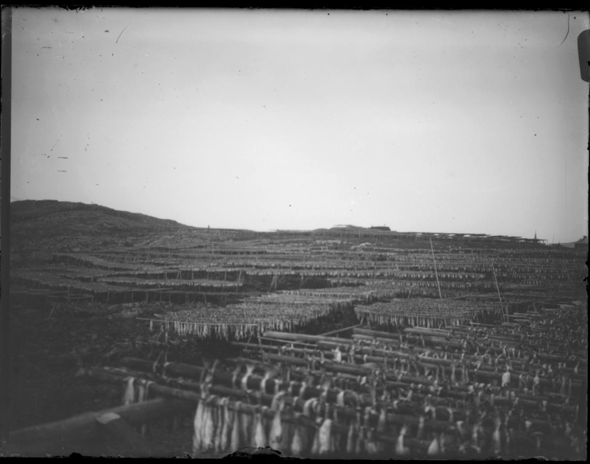 Fisk til tørk på hjeller. I bakgrunnen ser vi Klondyke og kirkespiret i Vardø