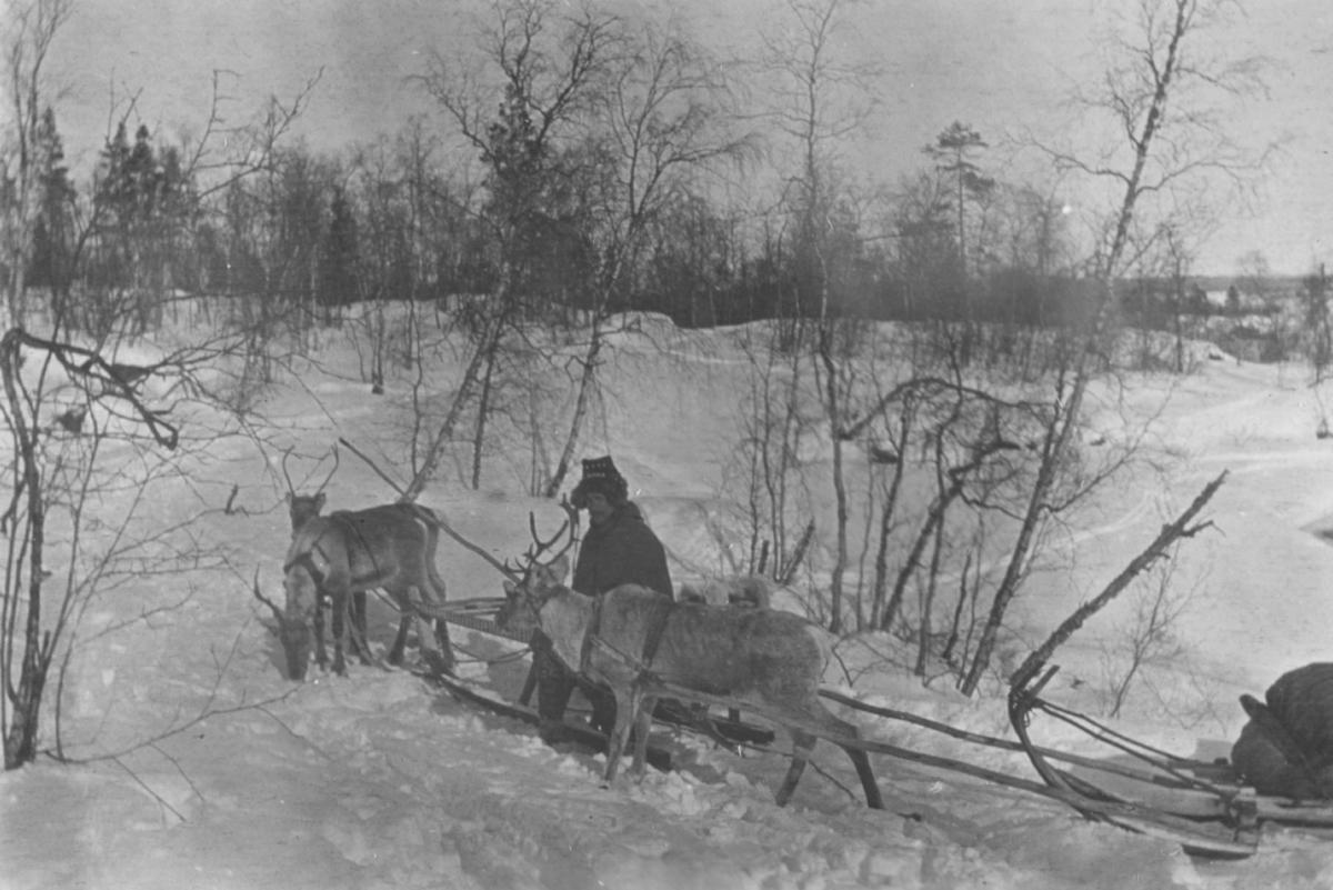 En mann som sitter mellom to reinsdyr. Slede bak.