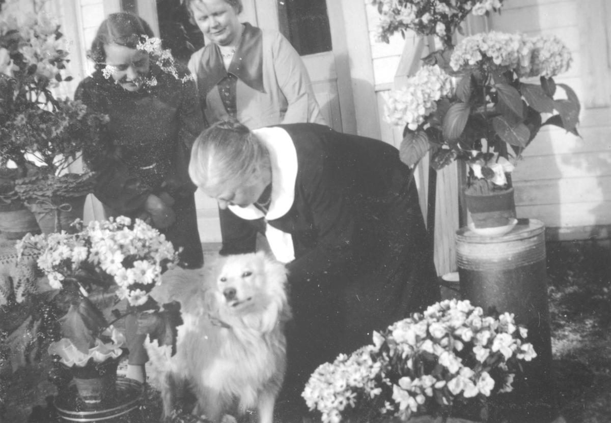 Karoline Ohlsen står bøyd ved siden av en hund. Bak henne står to damer. Det er mange blomster rundt.