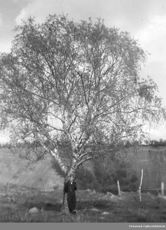 Ung mann fotografert ved stammen til en kjempefin bjørk i Neiden