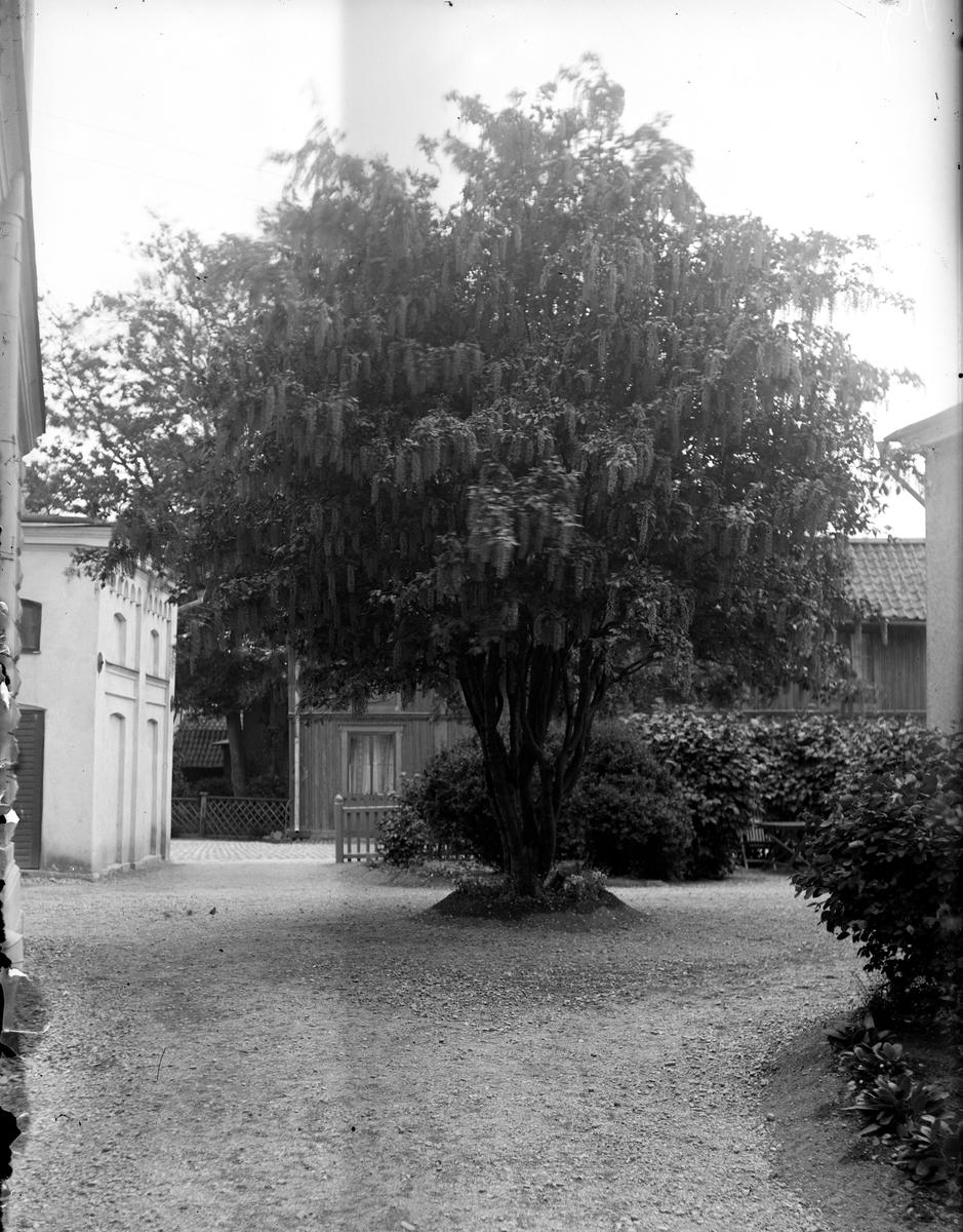 Kjellmodins gård Fotograf: E Sörman Fotokopia finns
