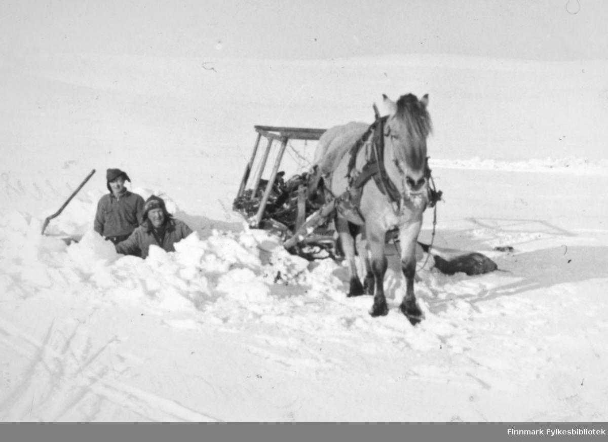 Albert Mikkelsen til venstre kjører torv til onkelen Harald Lind, Indre Kiberg ca. 1960.