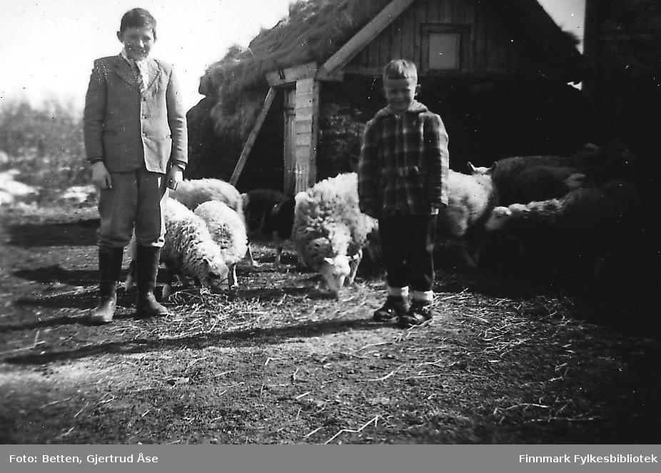 To gutter står foren et fjøs i Varangerbotn i våren 1956. Guttene fra venstre: Knut Roska og Bjørn Ottar Betten. Flere sauer går bak barna ved fjøset. Fjøset er med torvtak og torvvegger, gammeaktig byggning.