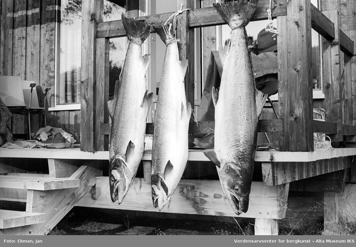 Fangst uten personer.  Fotografert 1970. Fotoserie: Laksefiske i Altaelva i perioden 1970-1988 (av Jan Ekman).