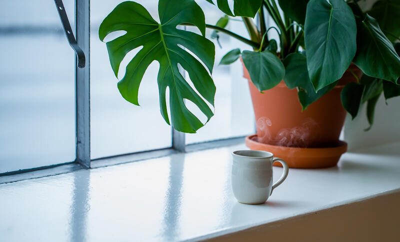 rykande kaffikopp i vindaugskarm med vindusblad (Monstera) (Foto/Photo)