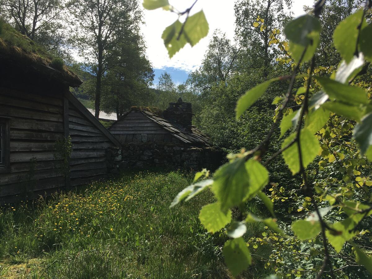 museumsbygningar, og bjørkeblad på høgre sida (Foto/Photo)