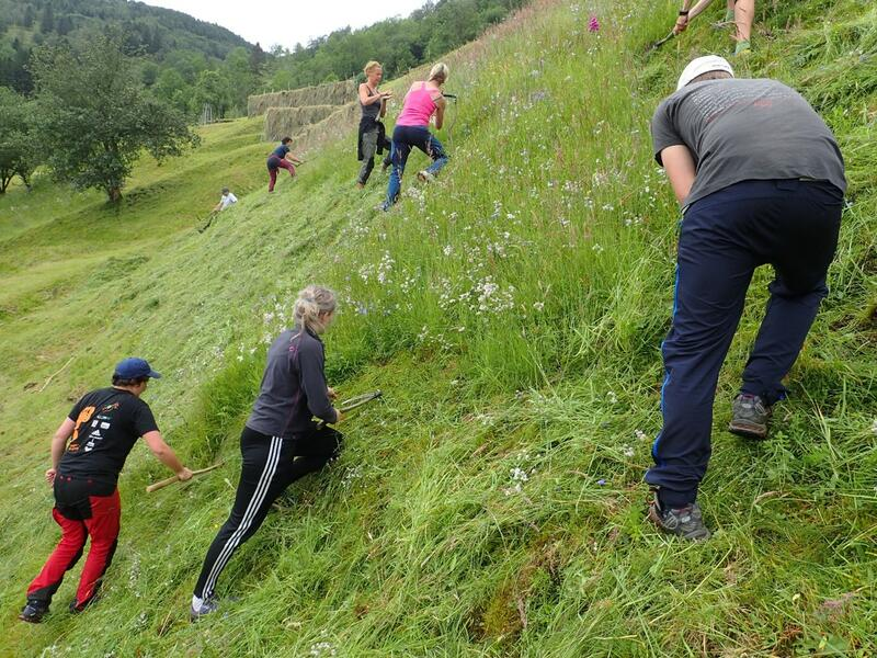 slåing av gras i bratt bakke (Foto/Photo)