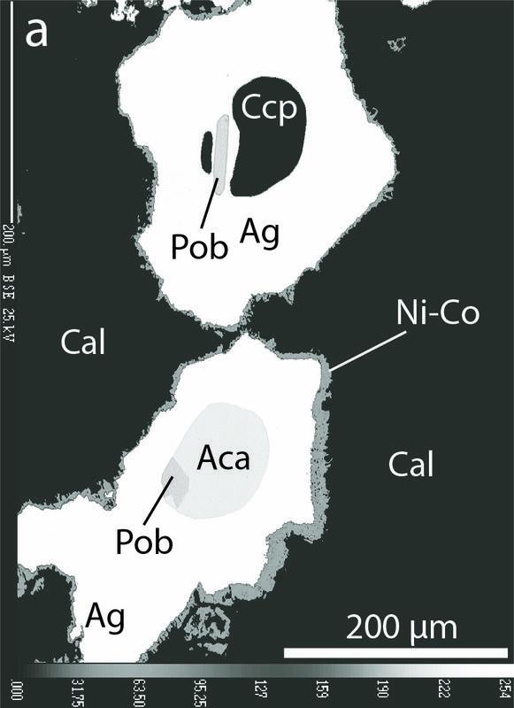 Bilde av sølvmalmen tatt med elektronmikroskop. Hvitt mineral er sølv. Andre mineraler: Cal = kalsitt, Ccp = kobberkis, Pob = polybasitt, Aca = akantitt, Ni-Co = Ni-Co sulfarsenider. (Foto/Photo)