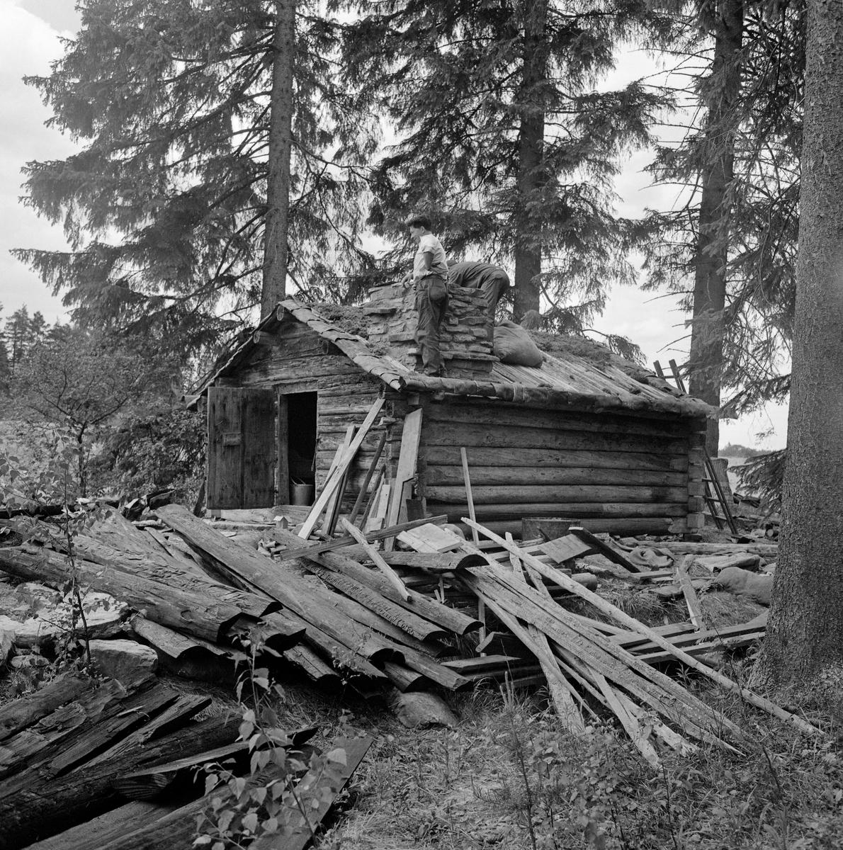 Fra gjenreisinga av Kvannstranddamkoia fra Trysil på Norsk Skogbruksmuseum sommeren 1971. Dette prosjektet ble initiert av Trygve Aasheim (1893-1975), som var museets kontaktmann i Trysil. Museet hadde på dette tidspunktet bare fem medarbeidere, og ingen av disse hadde handverkerkompetanse eller vaktmesteroppgaver. Arbeidet med å gjenreise Kvannstranddamkoia i friluftsavdelingen på Prestøya ble derfor utført av kontaktmannen og hans venn Jon Galaasen (1922-2002), riktignok med litt murerbistand fra en som kunne dette faget. Her var det sannsynligvis Galaasen som sto ved pipa da bildet ble tatt. Hvem som sto bøyd bak den samme pipa er det vanskeligere å se.   Kvannstranddamkoia er om lag 4,5 meter lang og 3,8 meter bred, og har med andre ord ei grunnflate på 17,5 kvadratmeter. Den har dør i den ene gavlveggen og dør i den andre. Inne i koierommet er det en gråsteinsmurt peis i hjørnet til høyre innenfor døra. Ellers har den veggefaste brisker langs de indre veggene med spisebord foran. Vis a vis peisen finner vi et uvanlig koiemøbel: Ei seng, som skal ha vært innsatt da disponenten i Mölnbacka-Trysil, Axel Mörner, skulle komme på overnattingsbesøk. Fotografier som ble tatt før Kvannstranddamkoia ble demontert for flytting til museet viser at den da hadde bølgeblikktak, muligens med et gammelt stikketak under. På museet ble den gjenreist med tretak, lagd av impregnerte halvkløvninger. Vi vet ikke bakgrunnen for at dette valget ble gjort, og det er usikkert om det fantes noen tradisjon for slike kavletak i Trysil. Bølgeblikktekket koia hadde hatt de siste åra den sto ved Kvannstranddammen ble sannsynligvis oppfattet som et nyere element, som harmonerte dårlig med en oppfatning om at huset var bygd på midten av 1880-tallet, eller kanskje til og med 10-15 år tidligere. På denne bakgrunnen kan karene ha følt at det var riktigst å gi koia et tretak da den ble gjenreist på museet. Langs takets ytterkanter ble det lagt never, som ofte ble brukt som fuktsperre i førindustriel