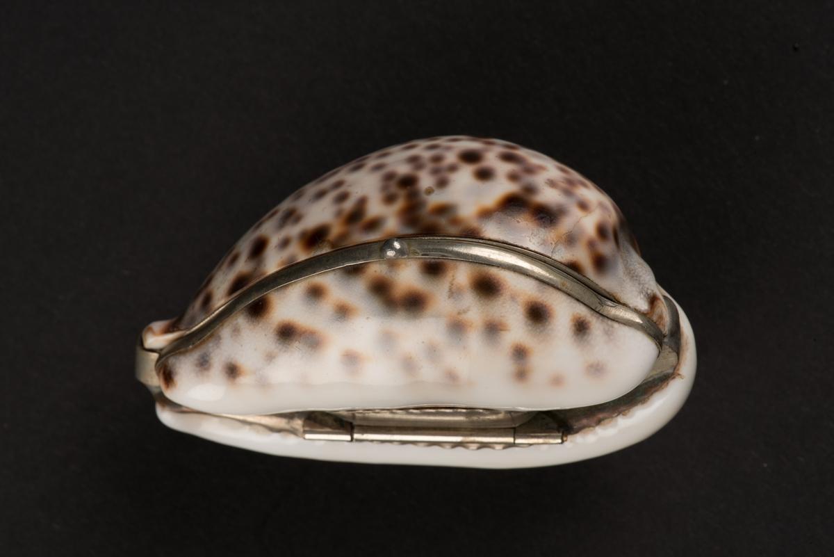 Snusdosa tillverkad av en kaurisnäcka. Snäckan, cypraea tigris, är vit med bruna fläckar.  Undersidan är delad och gjord till ett ledat lock. Kanterna och infattningen är gjord av vitmetall och locket öppnas med ett gångjärn.