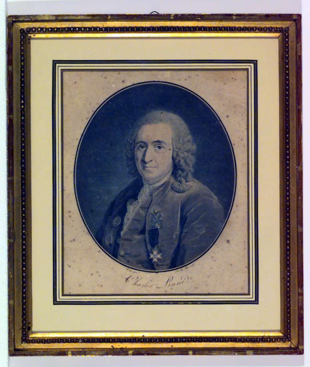 Portrett av Carl von Linné.
