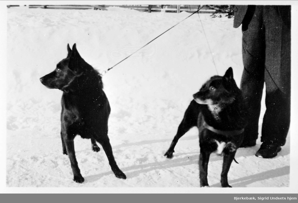 Hund, snø,