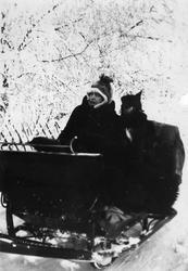 Slede, snø, hund, kvinne