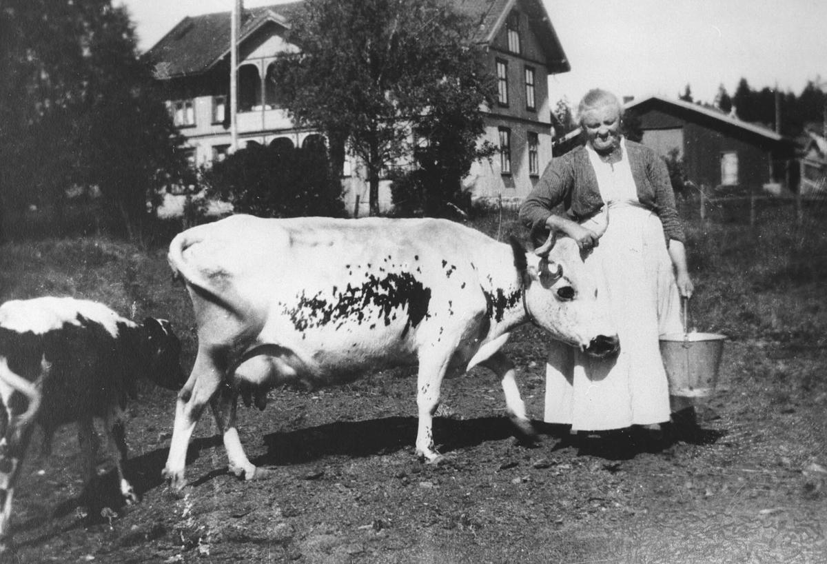 Mor Dammen mes kua og kalven sin foran Nygaard