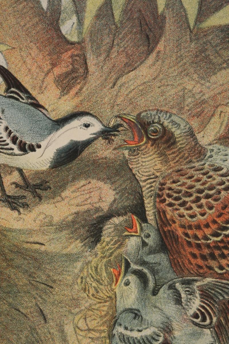 Fugler. Linerle, gjøk og flaggspett