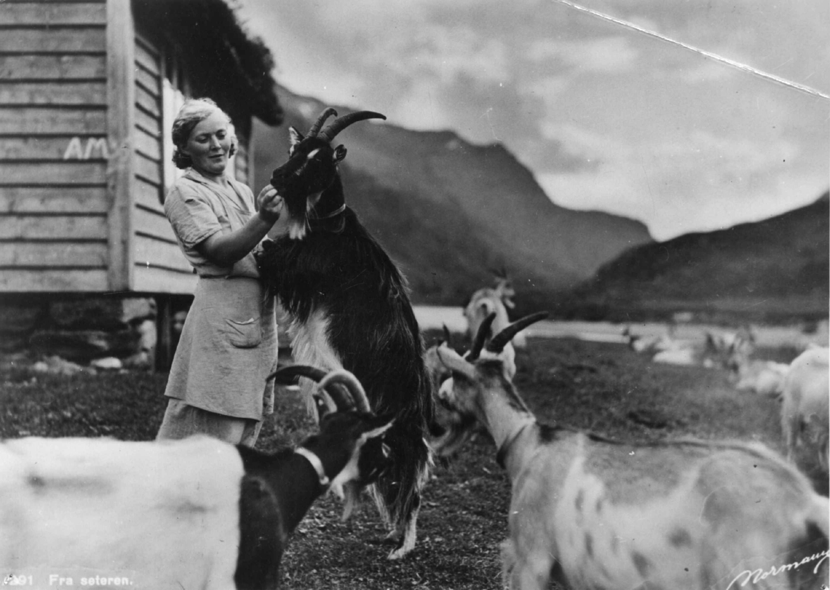 Avfotografert postkort. Kvinne steller geiter på seteren.
