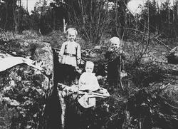Halvor Nicolai, Simon og Thor Q. Wiborg i krattskogen, Diger