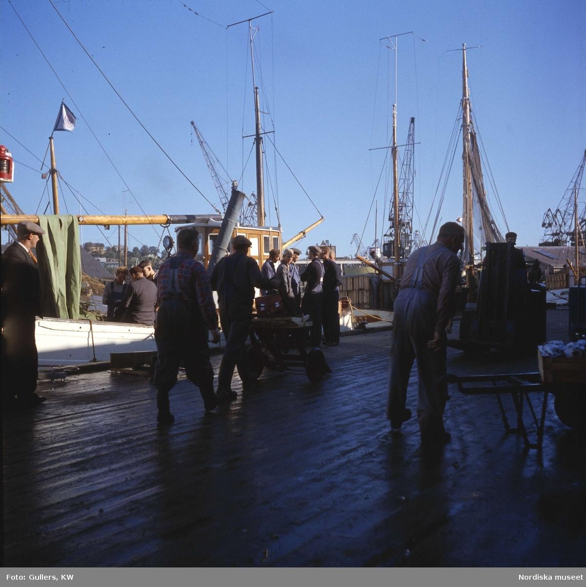 Göteborg. Fiskhamnen. Män i förgrunden.