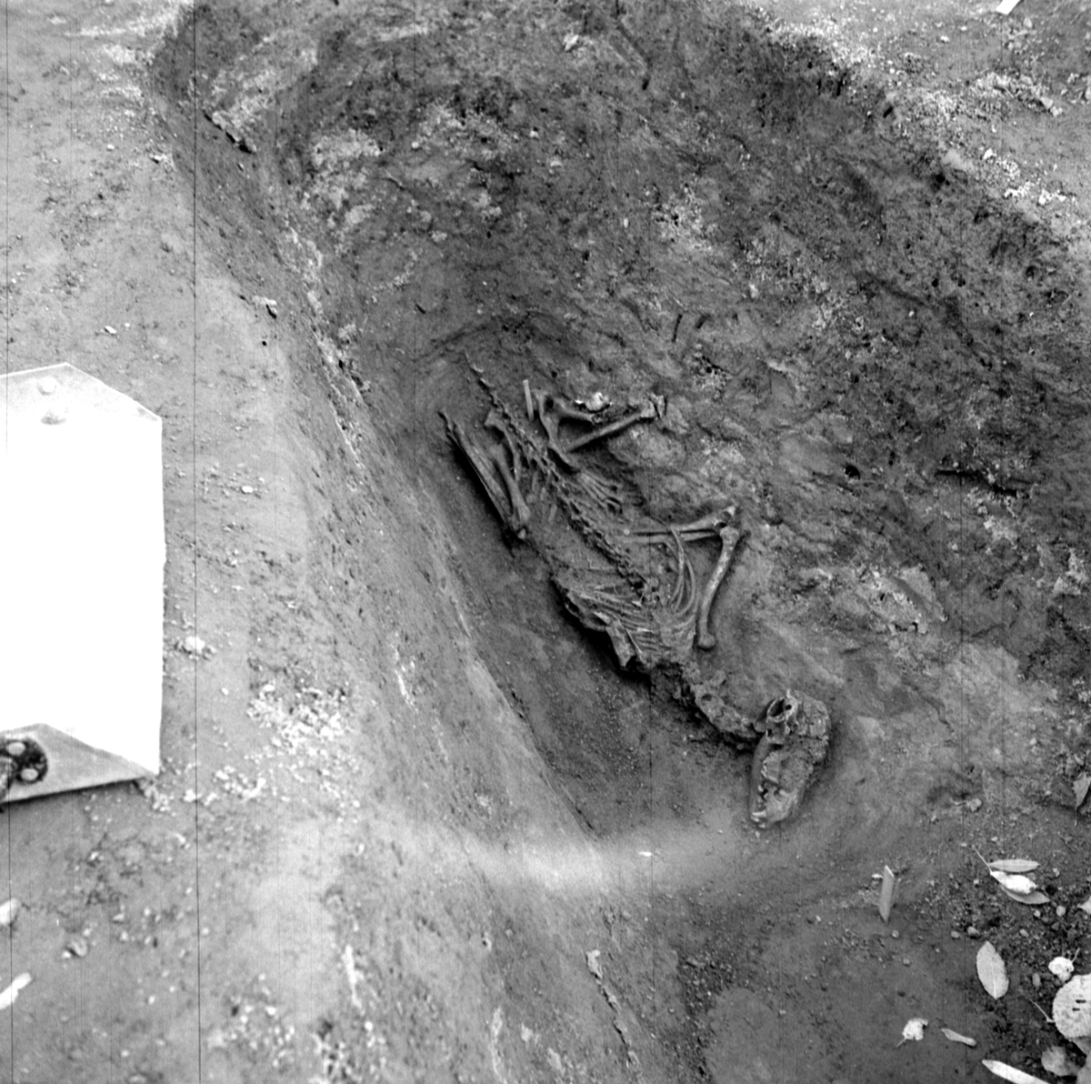Prästgården, grav 36 - Arkeologi Gamla Uppsala 1973
