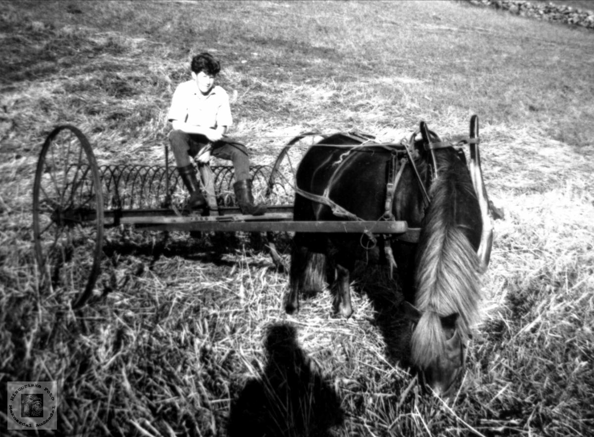 Slåttonn med hest og rive, Breilid, Bjelland.